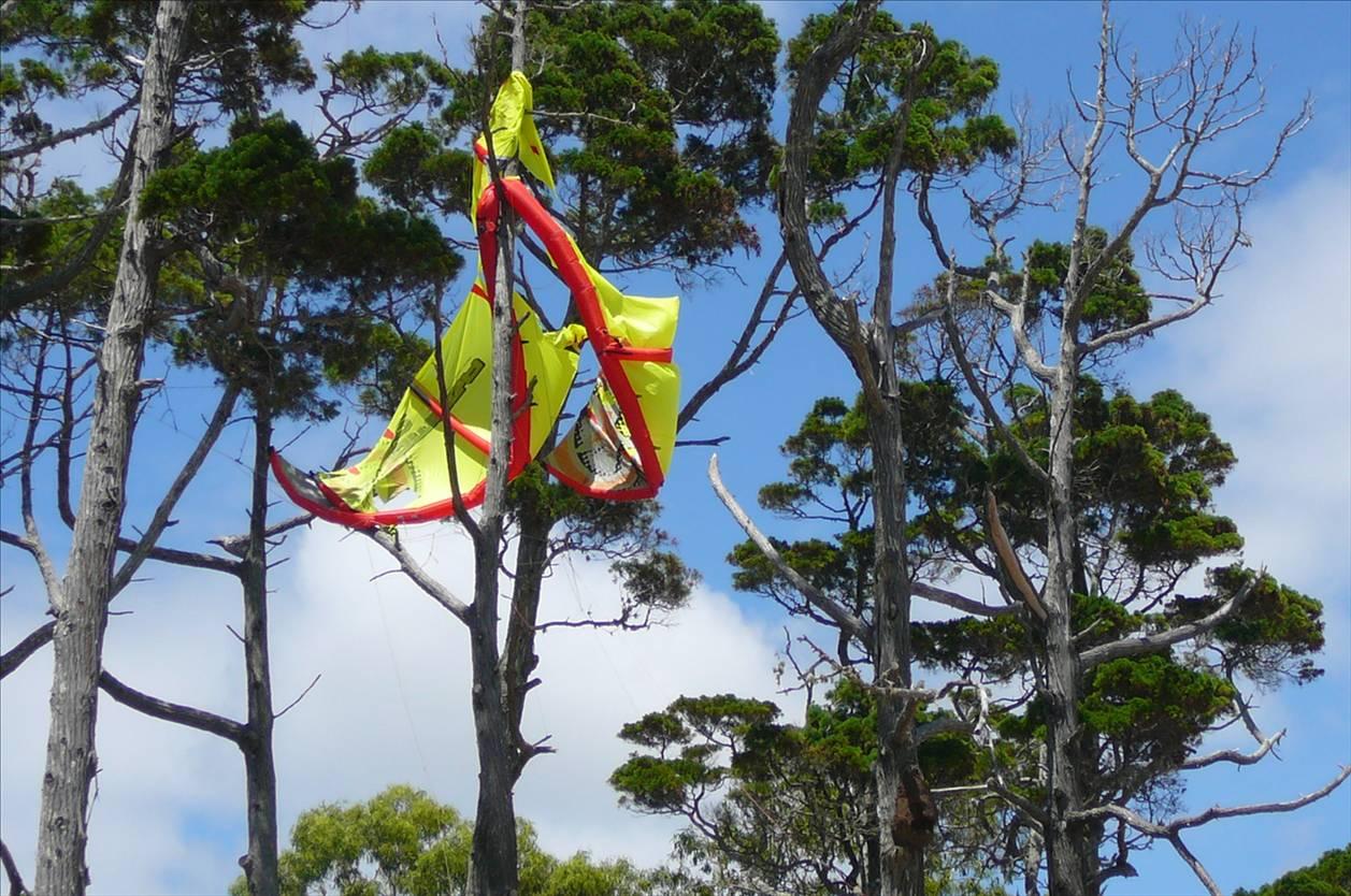 Kite in Tree